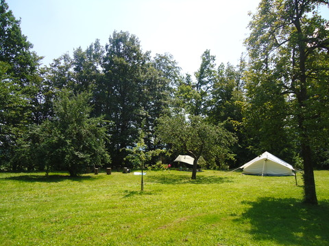 The lush, green campsite in the sun